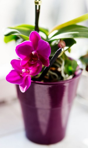problém s orchideou - riešenia