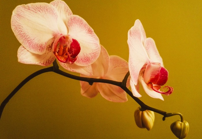 problém s orchideou a riešenia