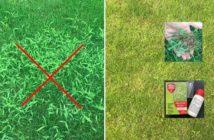 mušec v trávniku - ako sa ho zbaviť