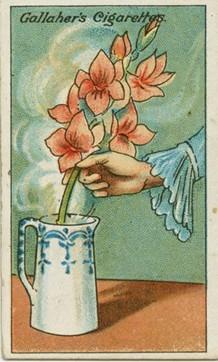 zvädnuté rezané kvety