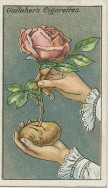 svieže kvety