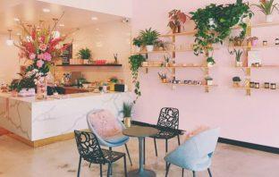 izbové rastliny - 8 najčastejších problémov