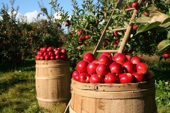 kde funguje samozber jabĺk