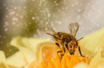 ako pomáhať včelám