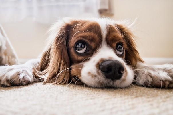 plánujete si kúpiť psa?