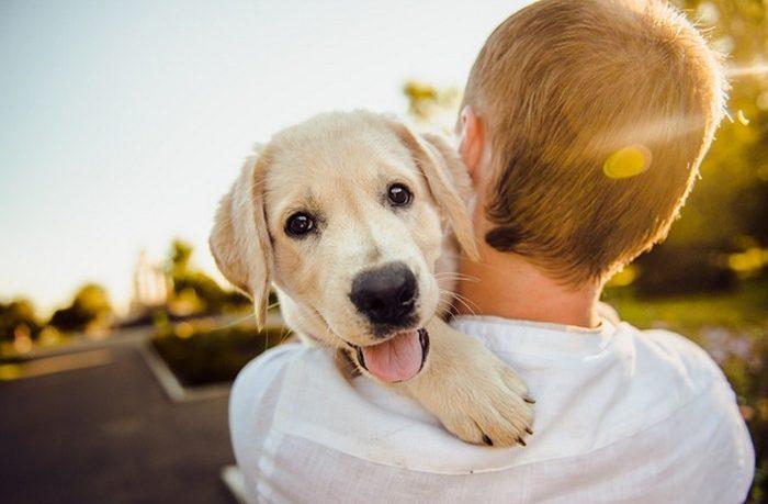 chcete si kúpiť psa?
