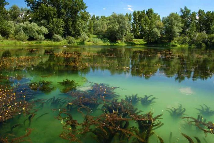 Bublinatky - tajuplná príroda Slovenska