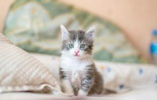 starostlivosť o mačku