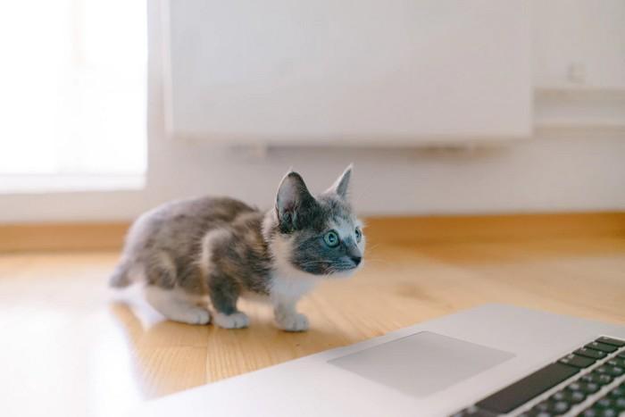 mačka pri počítači