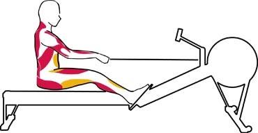 zásady cvičenia na veslovacom trenažéri