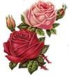 ikona ruža