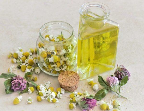 8 byliniek na posilnenie imunity. Liečivé účinky a užitočné tipy