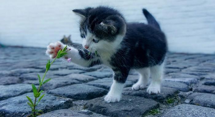 terapia zvieratami - mačka