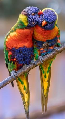 terapia zvieratami papagáj