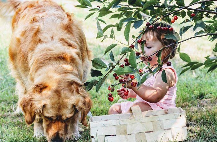 terapia zvieratami - pes