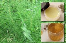 praslička roľná recepty