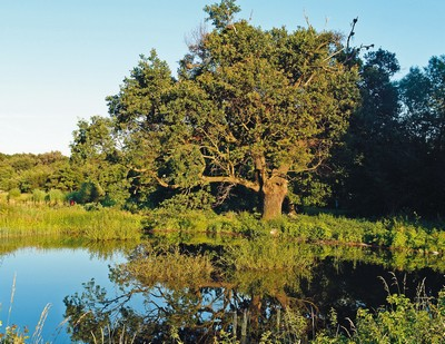 Prírodná rezervácia Šúr