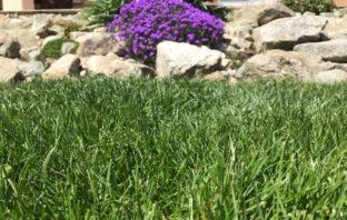 mach, huby a burina v trávniku