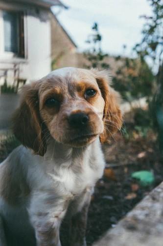 ako vychovať šťastného psa