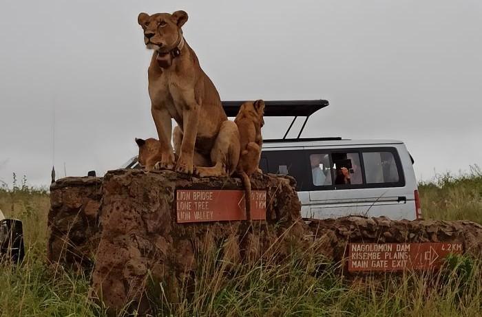 safari priamo v Nairobi, Keňa