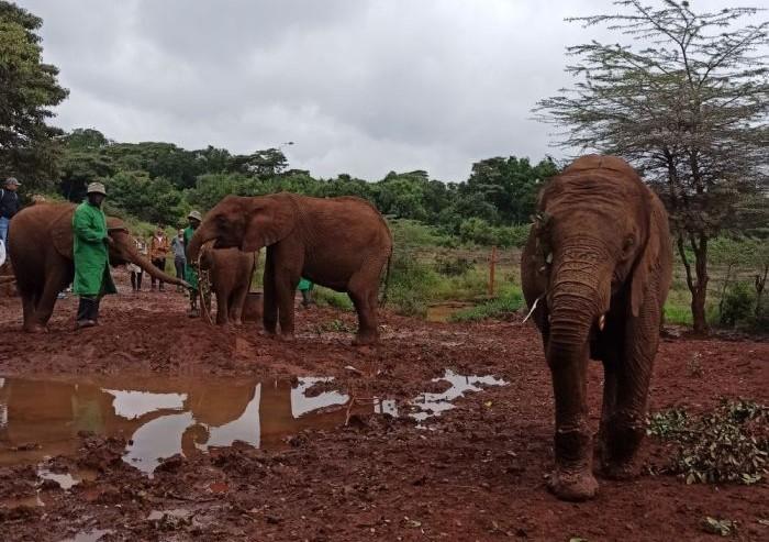 Keňa sirotinec pre slony