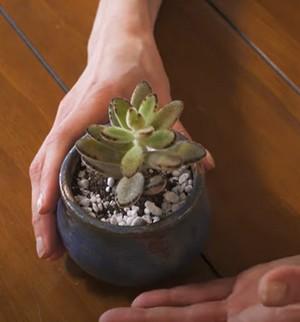 kalanchoe 8 rastlín na zlepšenie koncentrácie