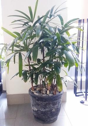 prútovnica 8 rastlín na zlepšenie koncentrácie