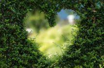 8 rastlín na zlepšenie koncentrácie