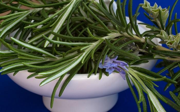 rozmarín 8 rastlín na zlepšenie koncentrácie