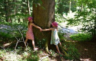 liečba stromom dendroterapia