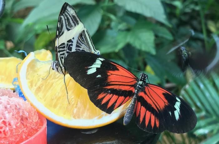ZOO vo Viedni - motýle