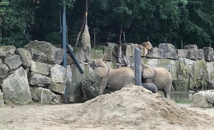 ZOO vo Viedni - slony