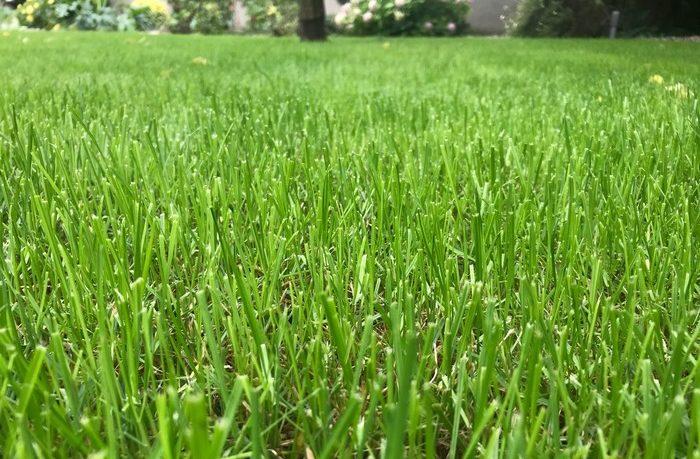 správne hnojivo pre trávnik