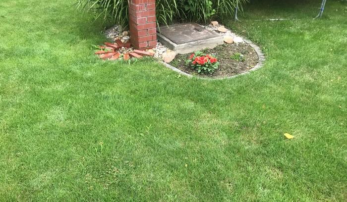 vhodné hnojivo pre trávnik