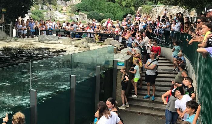 ZOO vo Viedni - tulene kŕmenie obecenstvo