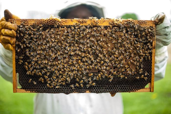včelár s plástom
