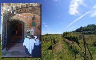 vínne cesty putovanie vinohradmi