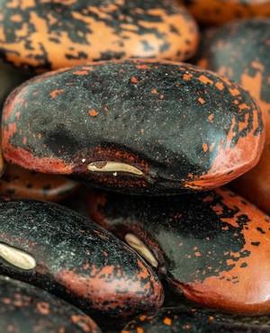 obľúbené strukoviny fazuľa