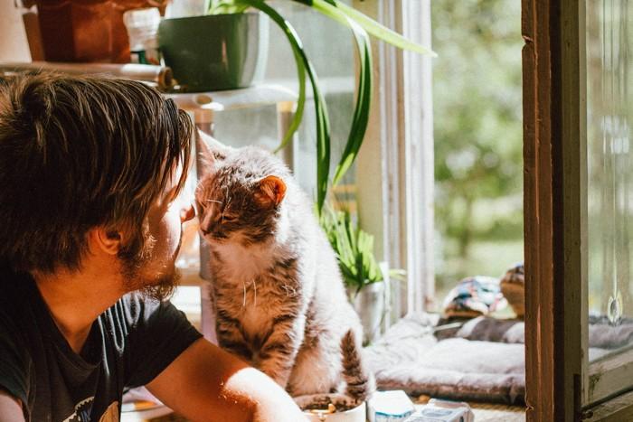 mačka domáci miláčik