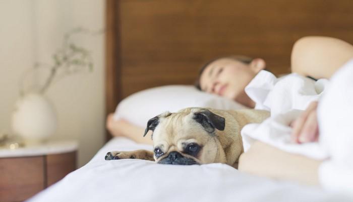 následky zlého spánku? spite s domácim miláčikom