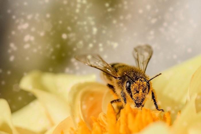 usilovný ako včelička