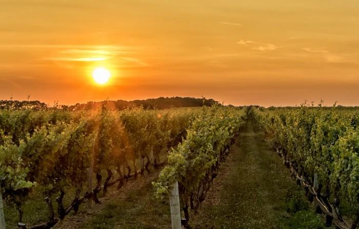 Malokarpatská vínna cesta - 10 kuriozít Trnavy