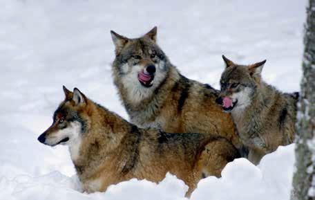 vlk Rekordy Tatier - 10 NAJ