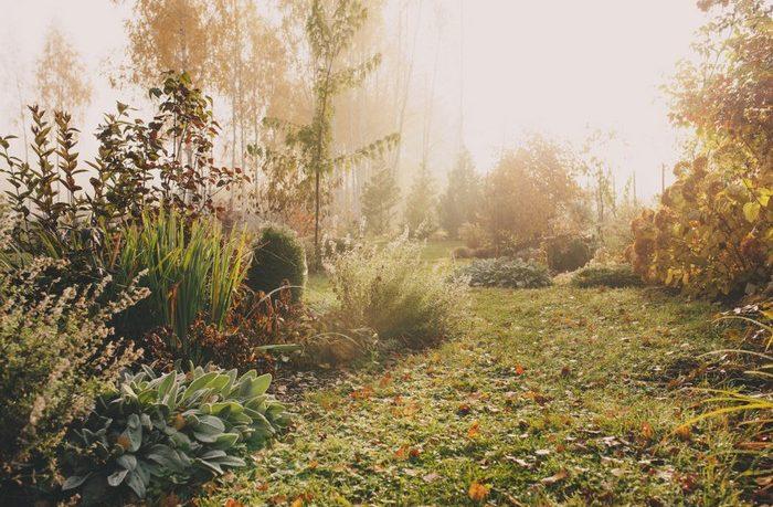 zazimovanie záhrady