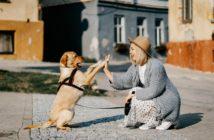 pes domáci miláčik