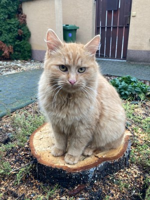 mačka výrub stromu