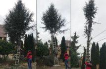 výrub stromu - aké má pravidlá