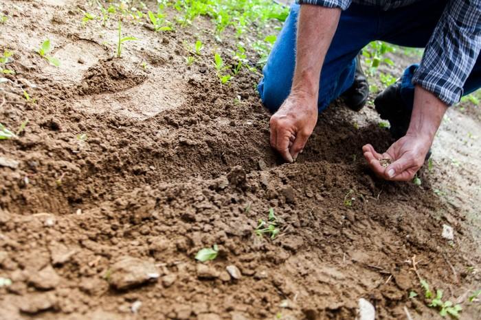 práce v záhrade výsadba