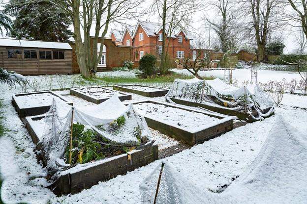 záhrada v januári záhony