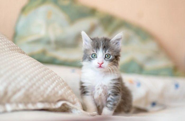 reč mačiek - rozumiete jej